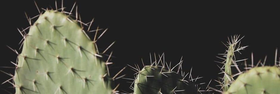 نبات الصبار